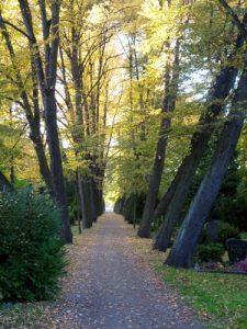 Friedhof Ackerstrasse