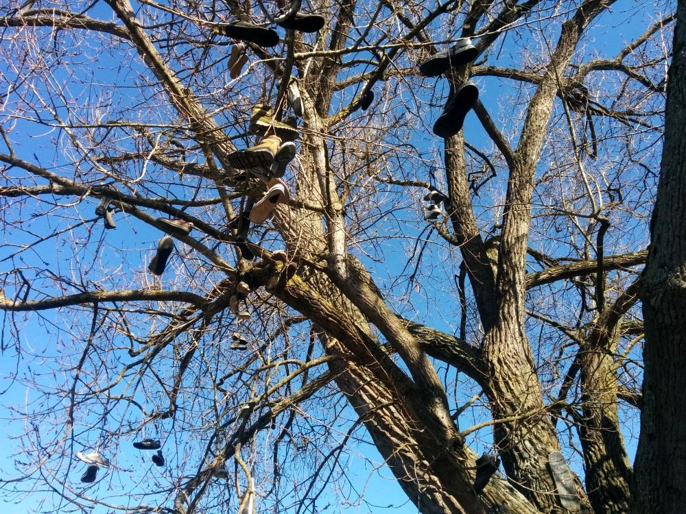 Baum mit Schuhen