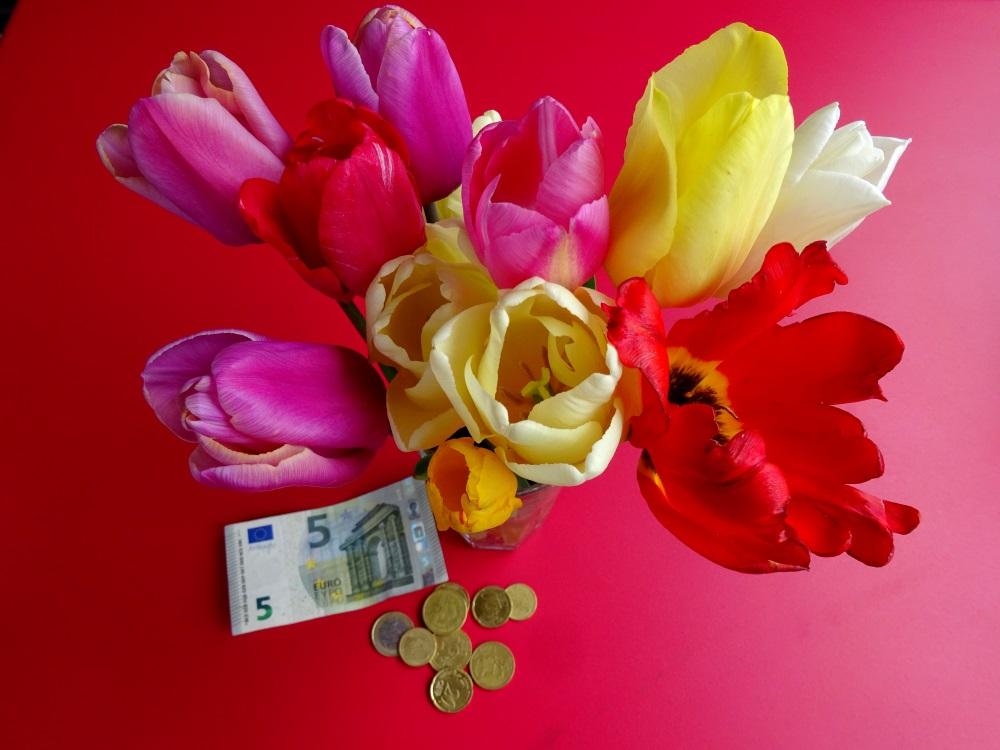 Tulpen vom Tulpenfeld