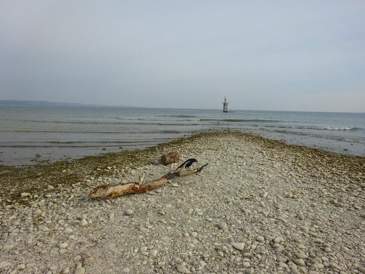 Hörnle Konstanz bei Niedrigwasser