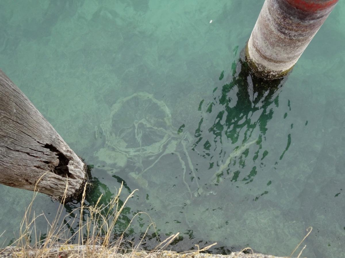 Rad im Wasser
