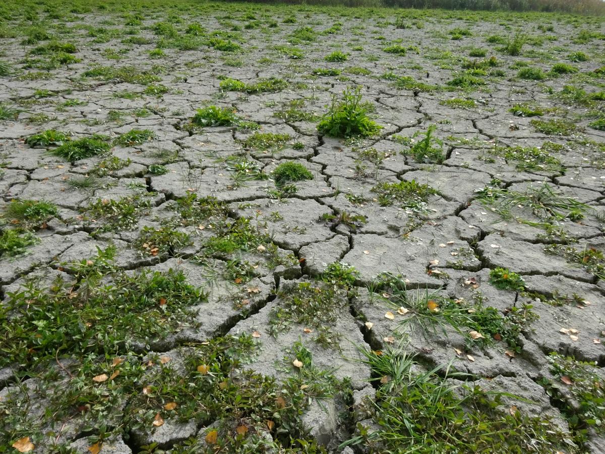 Ausgetrockneter Boden Ried bei Reichenau